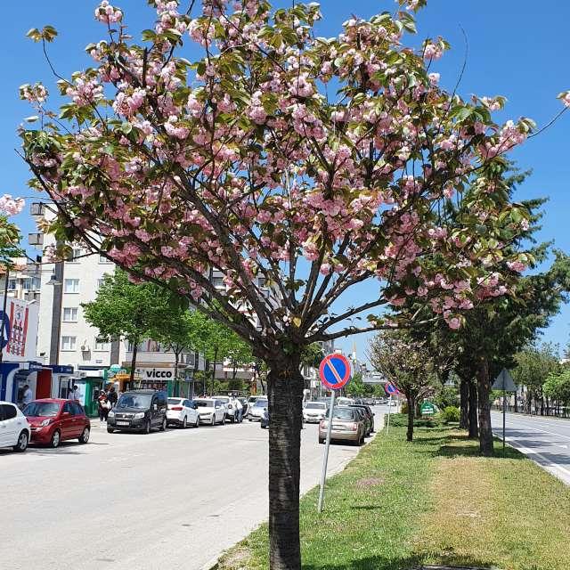 midday sun & flowering tree