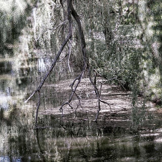 The shore of the stream.