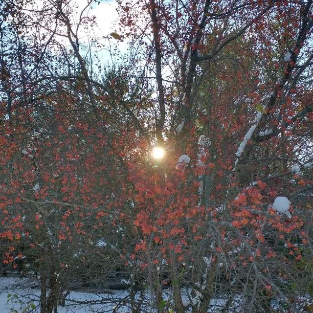 October Crabapple Sun