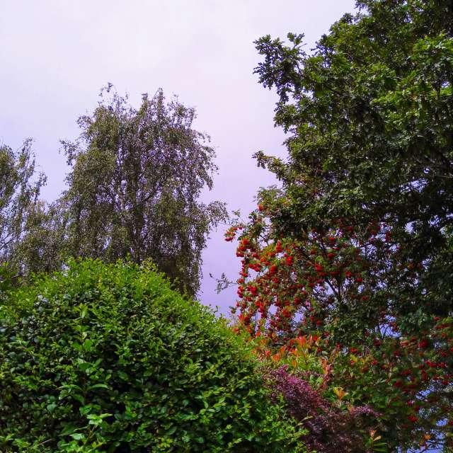 Thunder skies