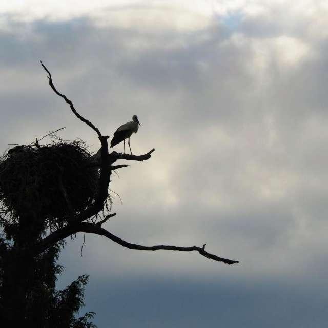 Čáp na hnízdě v zámeckém parku