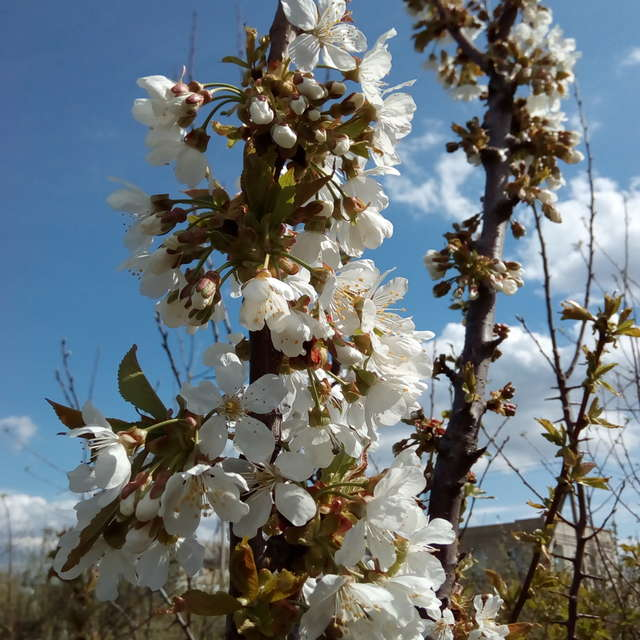 Одесская область весна