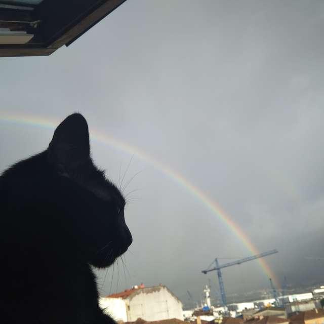 Gato Negro en ARCOIRIS