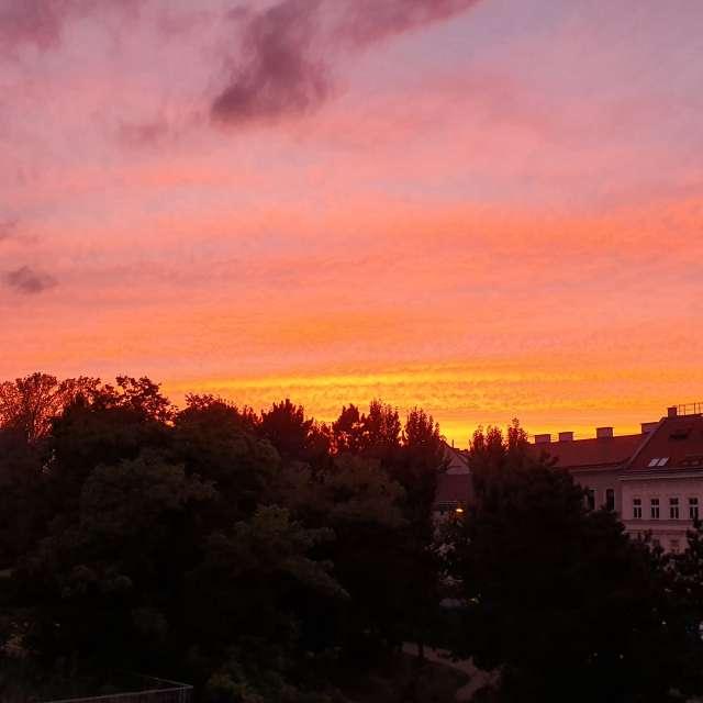 Frohes Farbenspiel in Wien