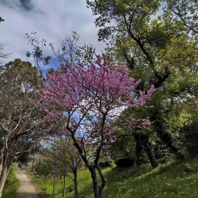 Arbre fleur chemin
