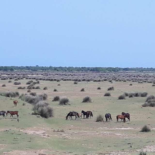 Wild horses and  bird paradise