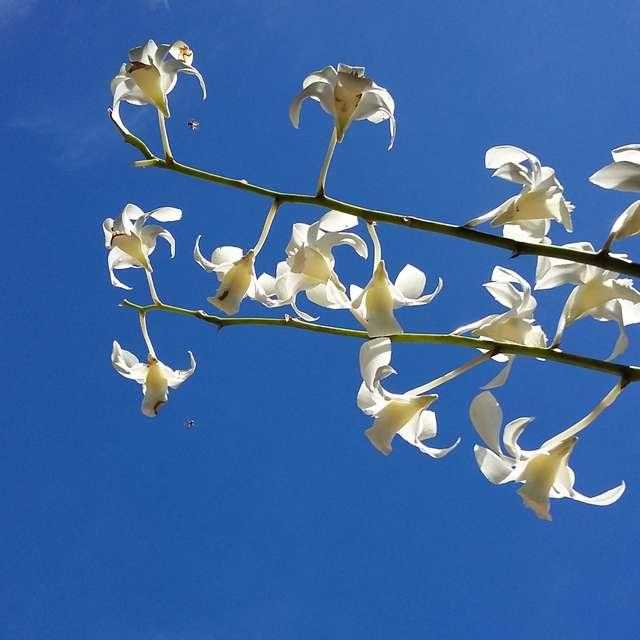 大空に向かって花咲く