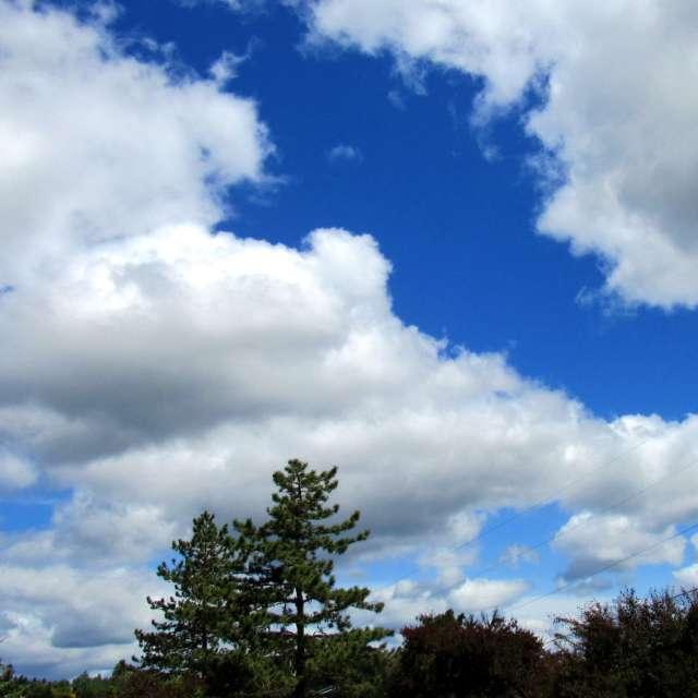 Broken Clouds Above Treeline