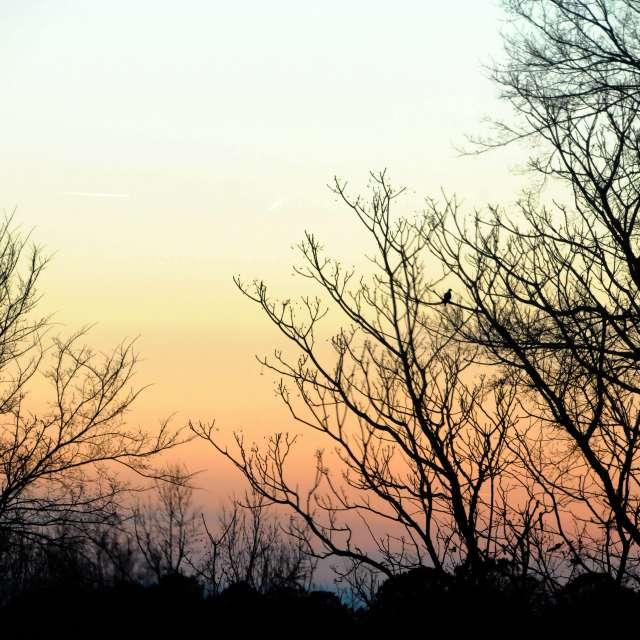 Twilight with Bird
