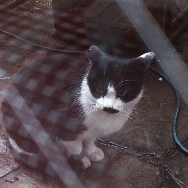 雨にうずくまるネコ