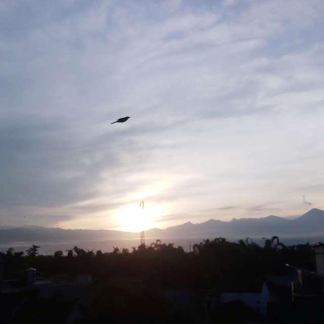 sunrise flying bird