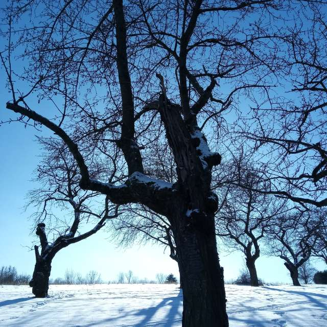 Bäume, Schnee, blauer Himmel