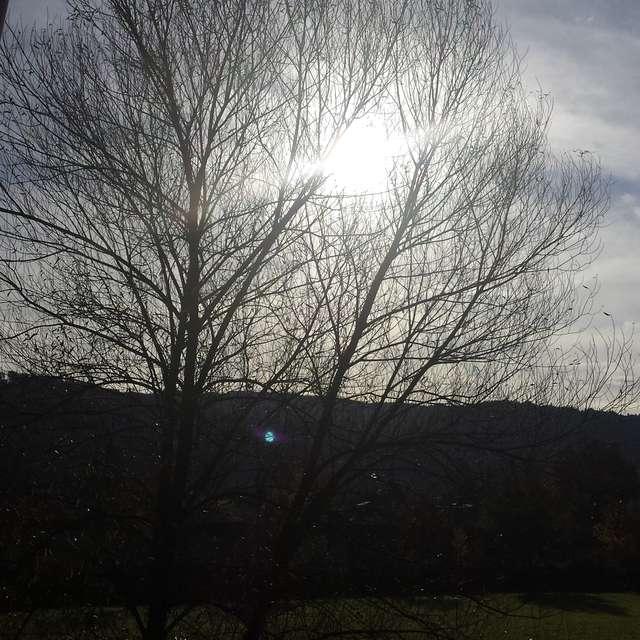 Die letzte Herbstsonne