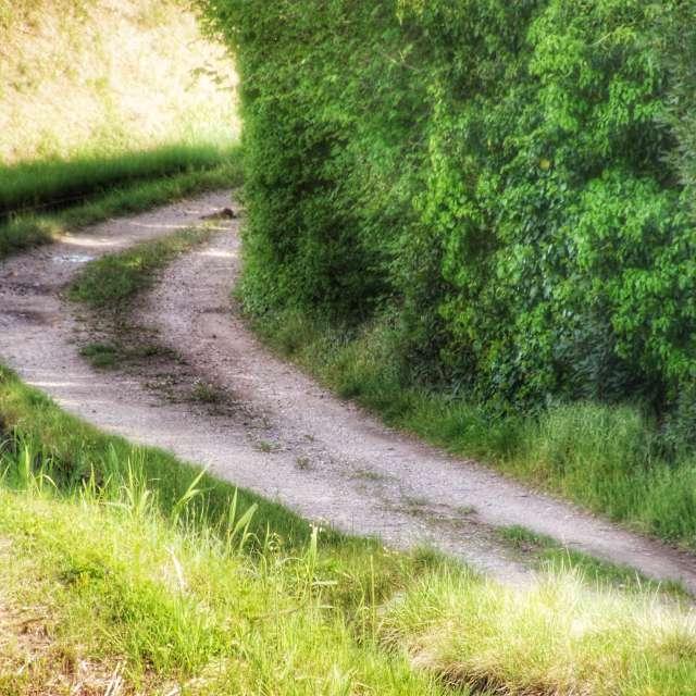 Un petit chemin