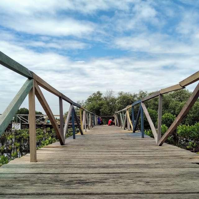 The mangrove lake bridge