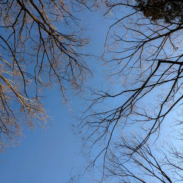 見上げれば木々溶け込む蒼