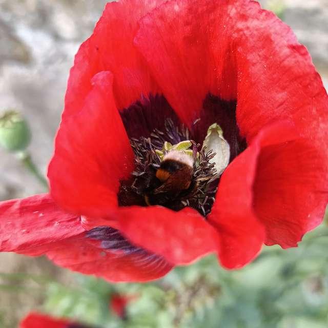 Just a little nectar
