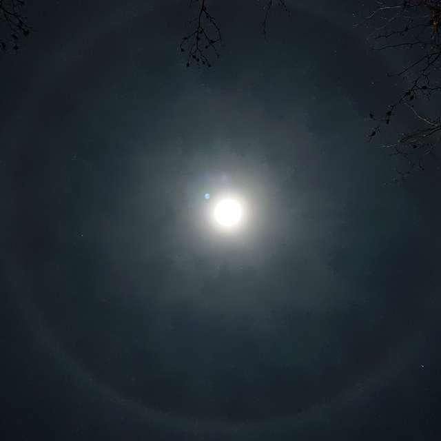 月夜の大輪